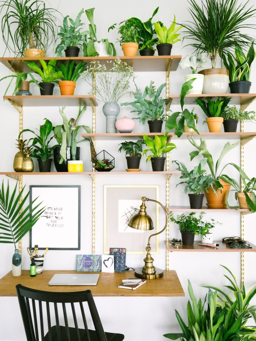 15+Gorgeous+Ways+to+Decorate+with+Plants